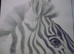 zebra-sketch|by Talon Drago