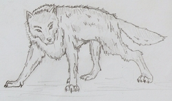 a Dire Wolf|by pokedemon_0222