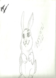 Cross-eyed Bunneh|by Illiana