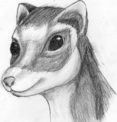 Ferret Profile|by Uilp