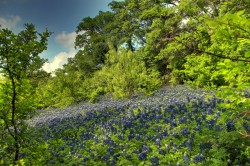 Bluebonnet Trail|by Sonder