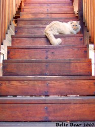 Feline Stair|by Belic Bear