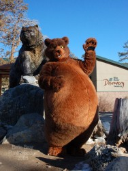 Big Bear Discovery|by Belic Bear