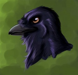 Raven|by IllariKeelo
