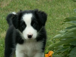 My dog when she was a pup :)|by KateTheMarten