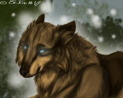 My very first realistic wolf|by Misskarls1Ashluvr