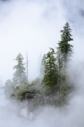 Foggy Trees|by tahoe_sushi