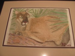 cougar watercolor|by Shoji_Tiger