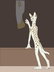 Serval to anthro TF|by picklejuice