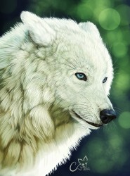 Blue Eyes Whitefang|by RaiKhan