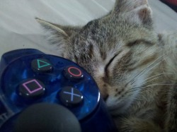 Playstation Kitty|by coonotafoo