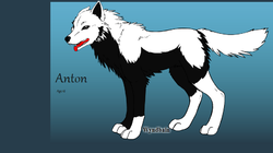Anton at 16 Wolf Form|by Werewolfgirl
