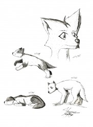 Sketches, Wolf Cubs|by Kaynyne