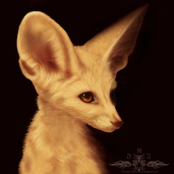 Speed paint practice 9 - Fennec|by Ykoriana