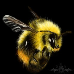 Speed paint practice 10 - Bee|by Ykoriana