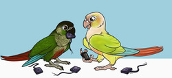 Texts From Parrots|by Kalan