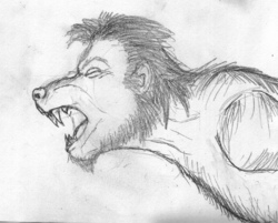 Werewolf Mid Shift Sketch|by Silvermane77