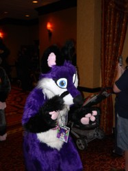 Violet at Furry Fiesta 2013|by Of The Wilds