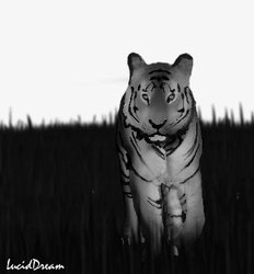 Tiger midst grass|by Luciddream