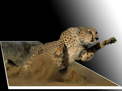 pouncing 3-D cheetah|by doggie love