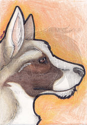 ATC: German Shepherd 2013|by airraiser