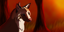 OLD ART : Coyote|by Inabi