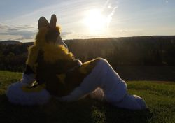 Zeo Fall's Sunset Photoshoot [07/15]|by ZeoHusky
