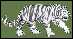 Feral: White Tiger 2013|by airraiser