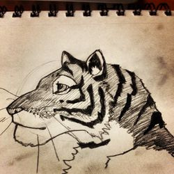 15 minute Tiger Sketch|by 0redwall0