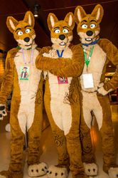 Dingos Down Under - MFF 2013|by FoxLightning
