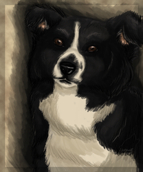 Pet Portrait: Jolly|by Lonewolf666