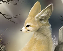 Animal Portrait - Fennec|by MissOro