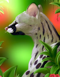 Animal Portrait - Genet|by MissOro