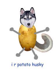 Potato Husky|by Flite