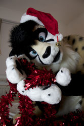 Spotty Christmas everyone :3|by Tristan