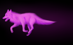 Purple Wolf|by Indigo Ivy