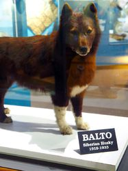 Balto 2|by SMWolf