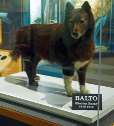 Balto 1|by SMWolf