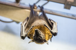 Bat|by Morghus