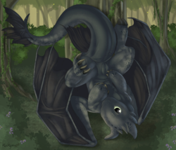 Toothless|by RedRaptor