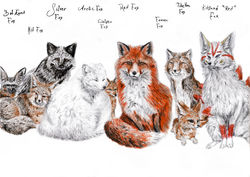 A Bunch of Types of Foxes|by coonotafoo