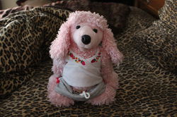 Pink Poodle 1|by Gray Muzzle