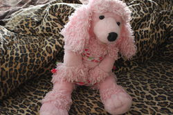 Pink Poodle 5|by Gray Muzzle