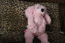 Pink Poodle 7|by Gray Muzzle