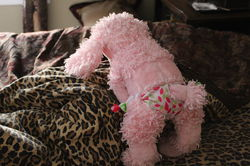 Pink Poodle 8|by Gray Muzzle