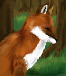 The Green Glen Fox|by sacreddawn