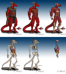 Groul Akgez Anatomy - Picture Collection|by ReptileCynrik